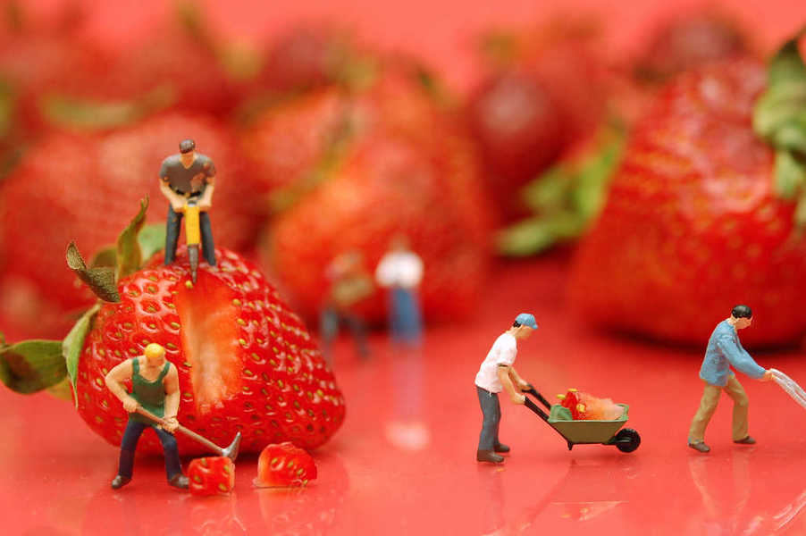Photo of tiny people processing strawberries