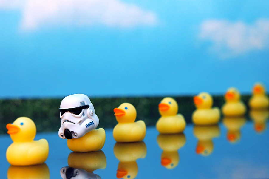 Photo of a row of ducks, and one has a stormtrooper helmet